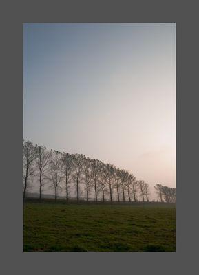 Soft Rural Light #1