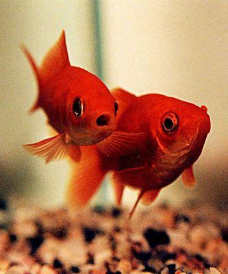 sogar Fische können blöd kucken!!!