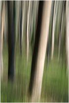 Sogno nel bosco 1