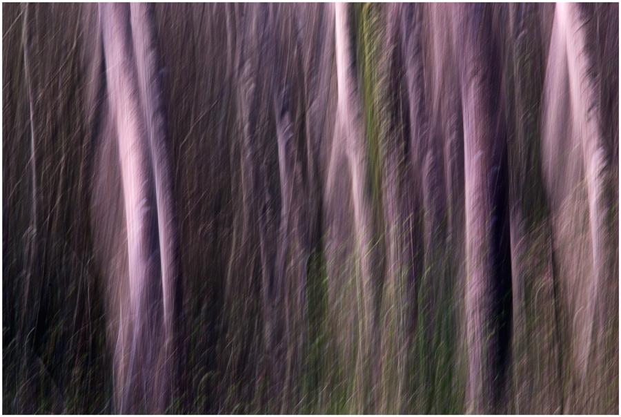 Sogno nel bosco 2