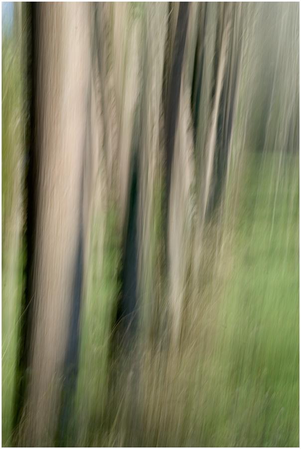 Sogno nel bosco 3