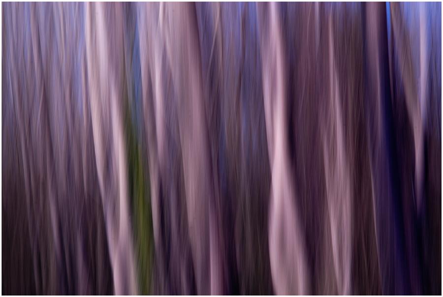 Sogno nel bosco 4