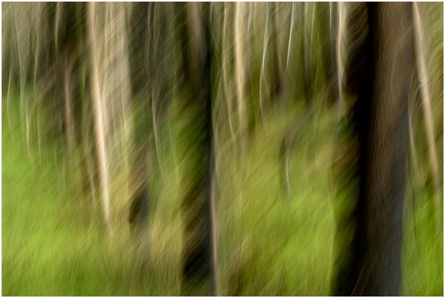Sogno nel bosco