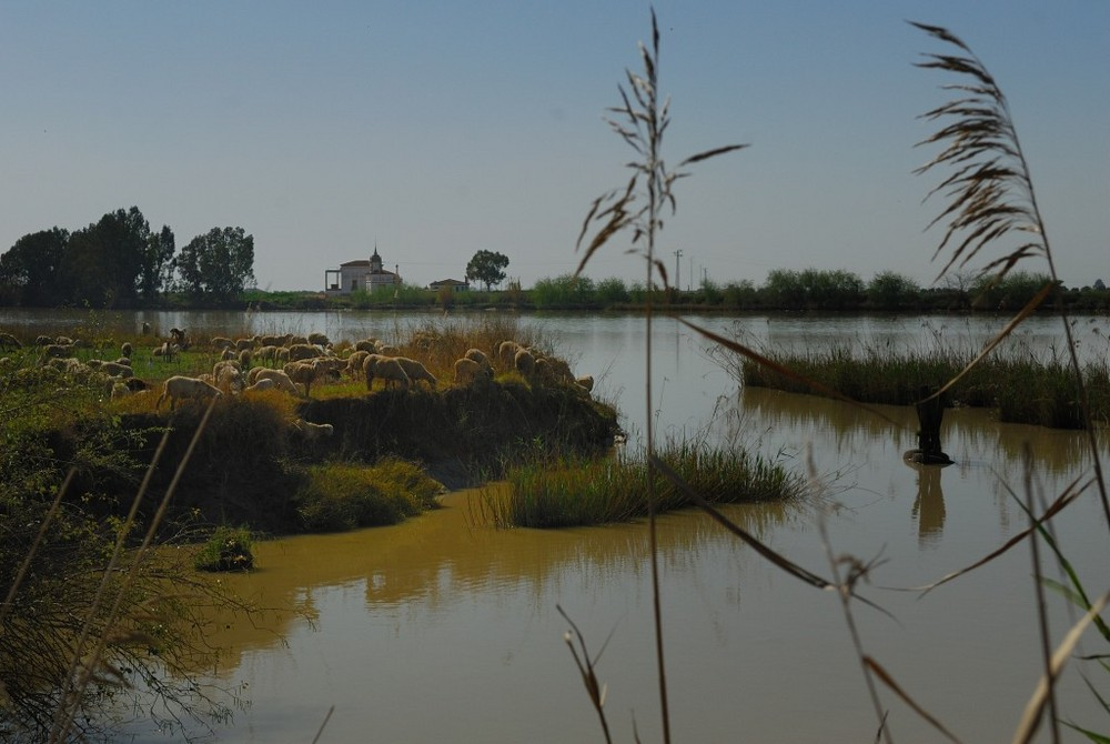 Soif sur le Guadalquivir
