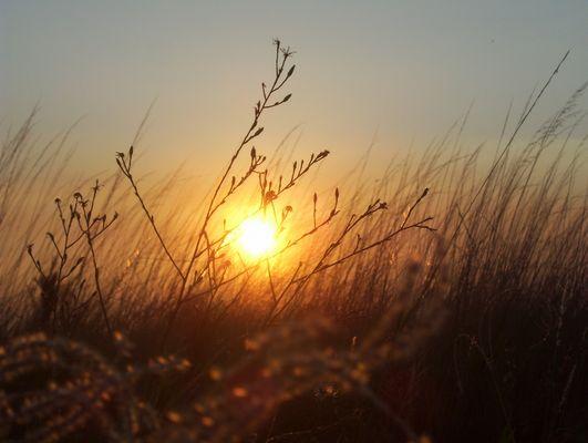 sol de otoño