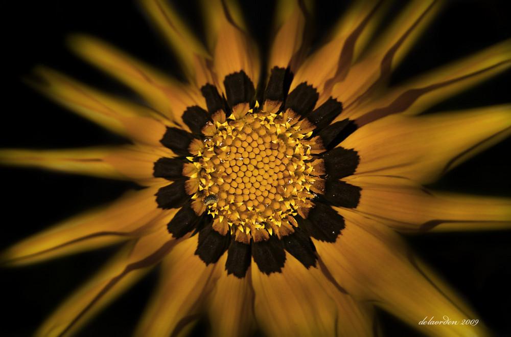 Sol ( Para Adriana Lissandrini )