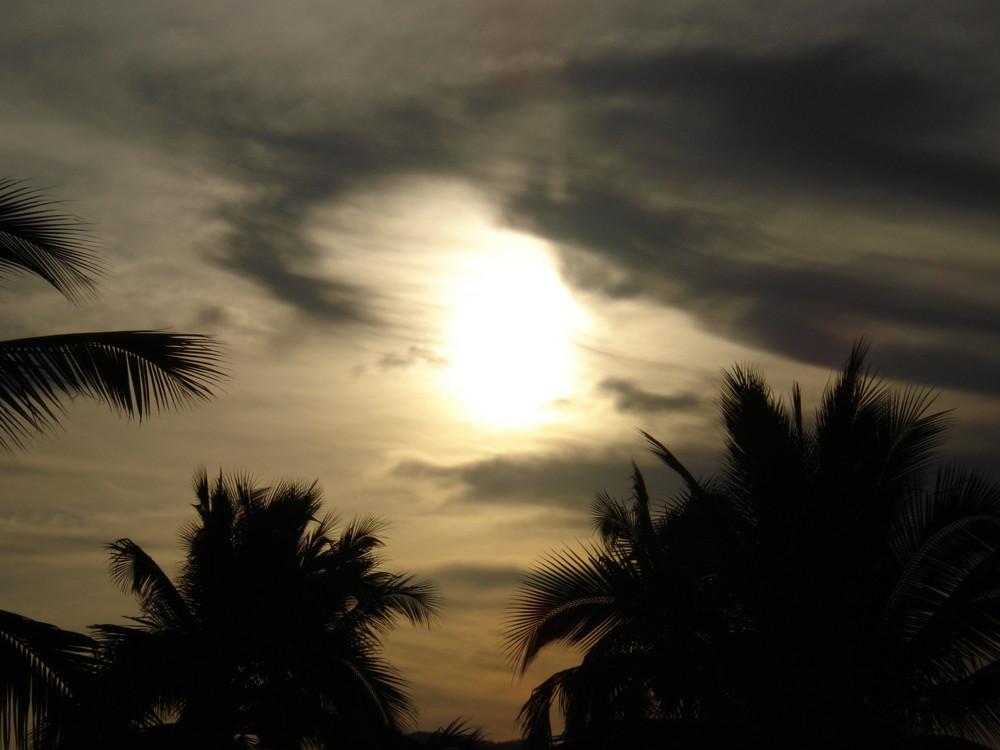 sol y palmeras