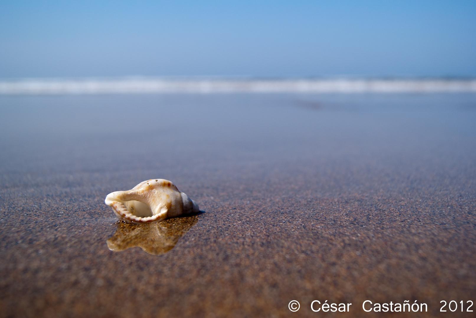 Sola ante el mar