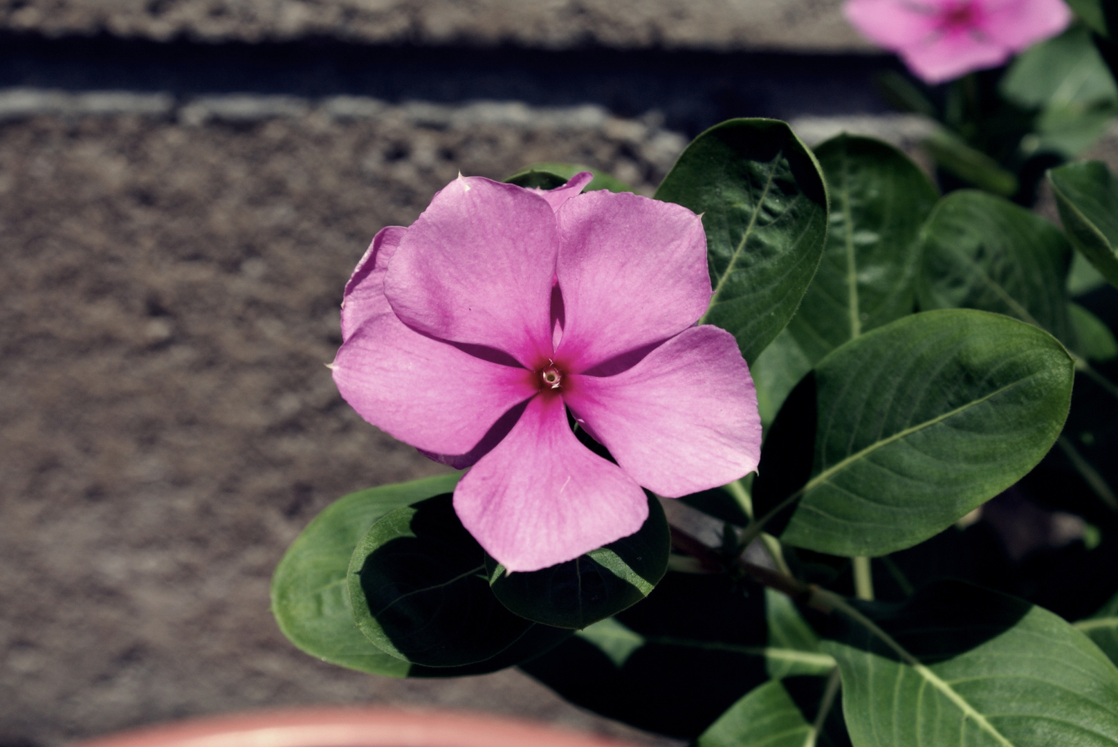 Solamente una Flor¡