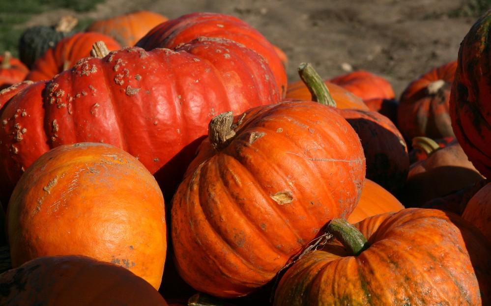 Solche Farben bringt der Herbst ...