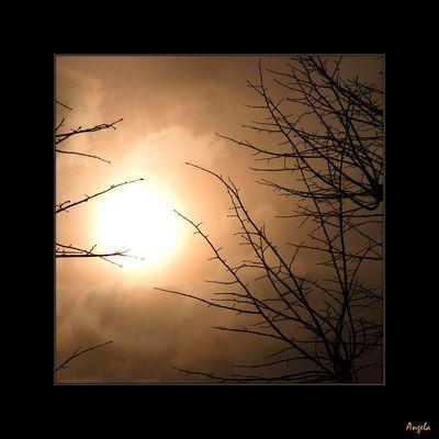 Sole de Berghem