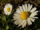 Sole di primavera