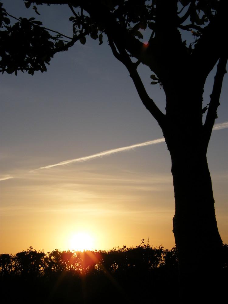 soleil arbre et avion