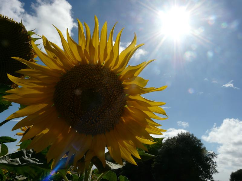 Soleil au soleil