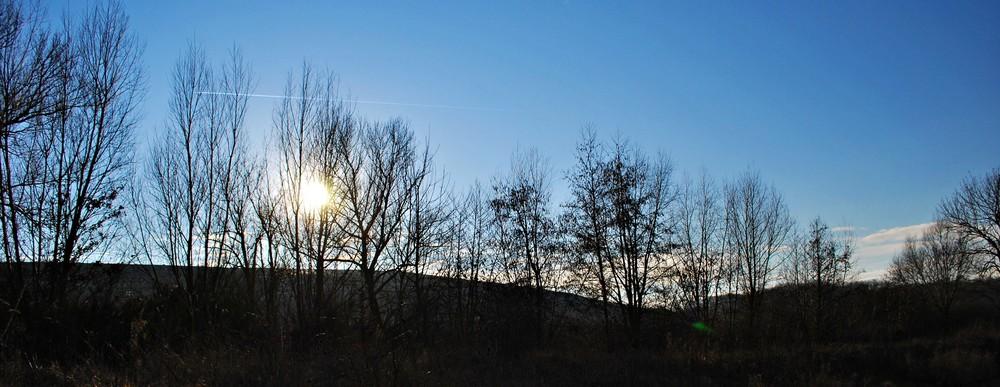 Soleil couchant deriere une ligne d'arbre dénudés par l'hiver
