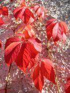 soleil d automne