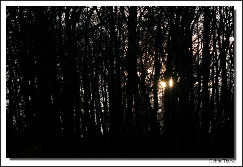 Soleil derrière les arbres