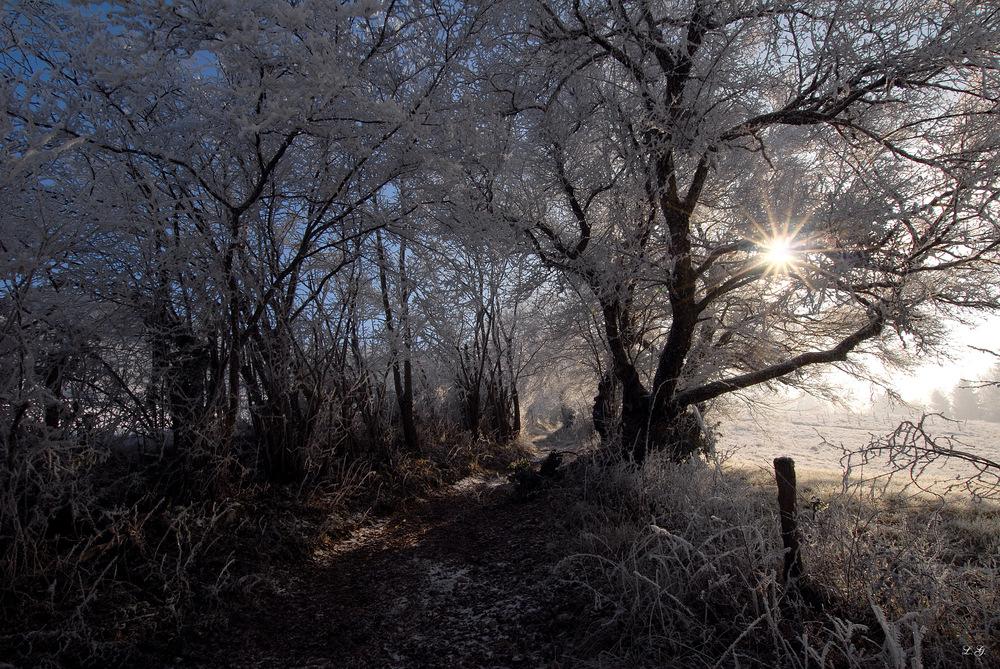 Soleil d'hiver, Wintersonne