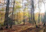 Soleil du matin en forêt