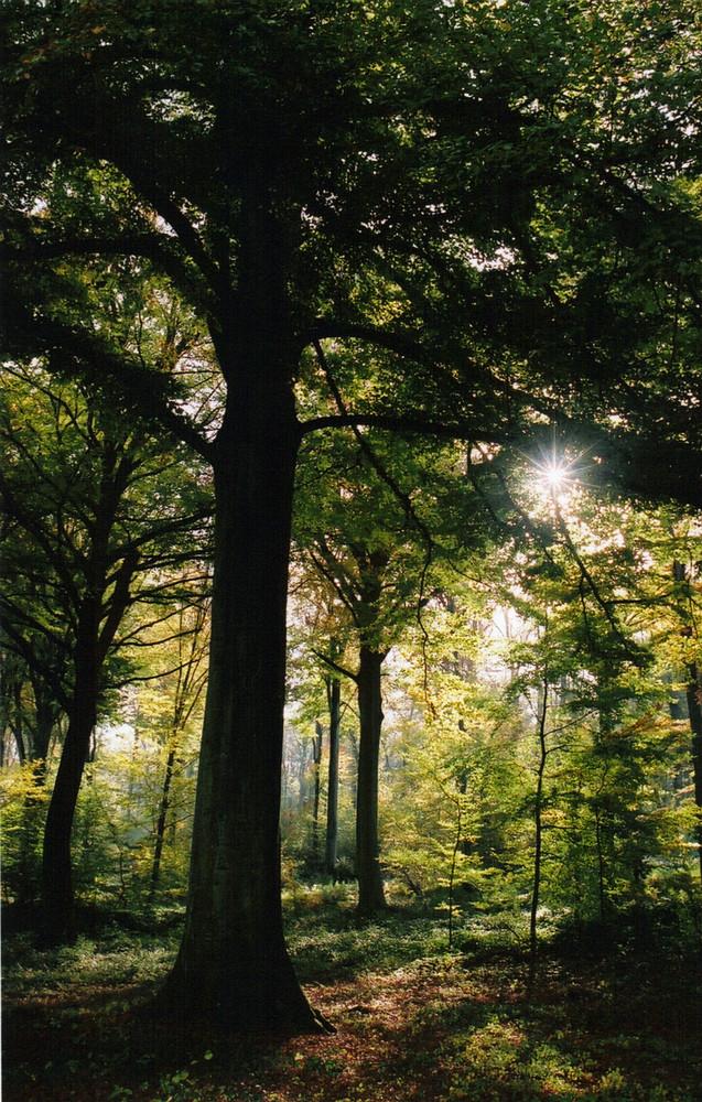 Soleil en forêt de clermont, oise