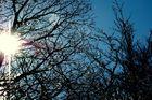 soleil et arbres