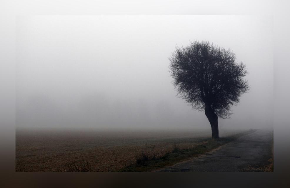 Soleil et brouillards
