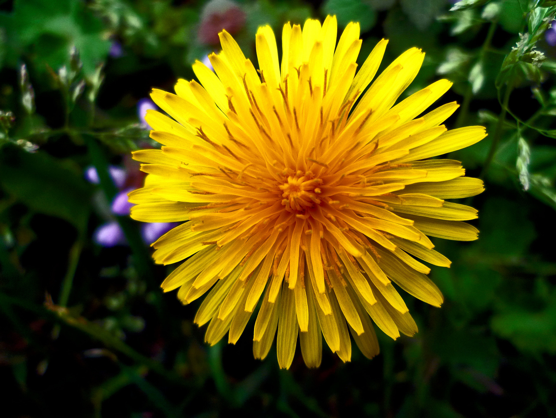 soleil fleuri