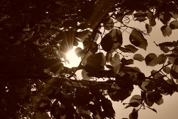 soleil jouant avec les arbres