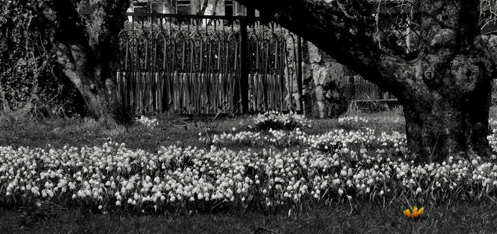 Solitär im Frühling