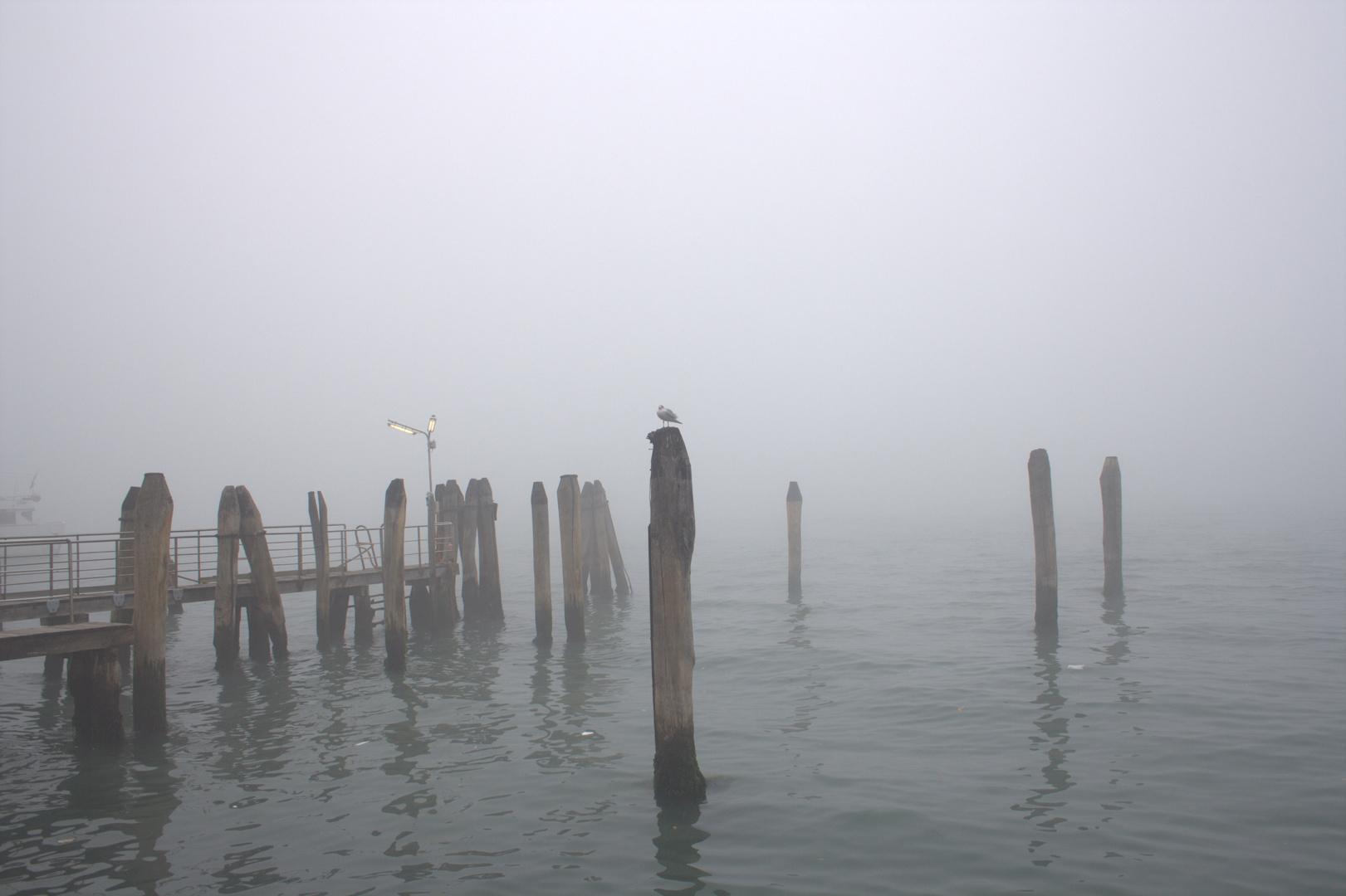 solitaria entre la niebla
