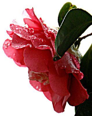 Solitaria sotto la pioggia