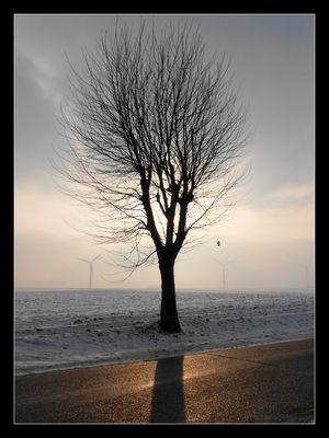 Solitude ...
