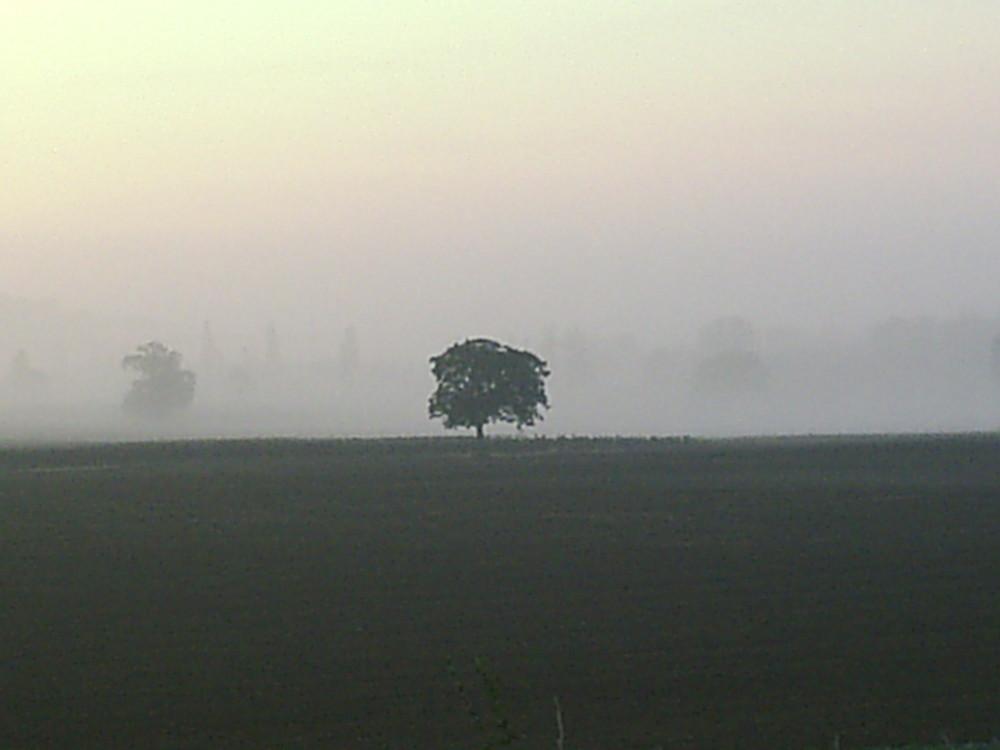 Solitude dans un champ de brume