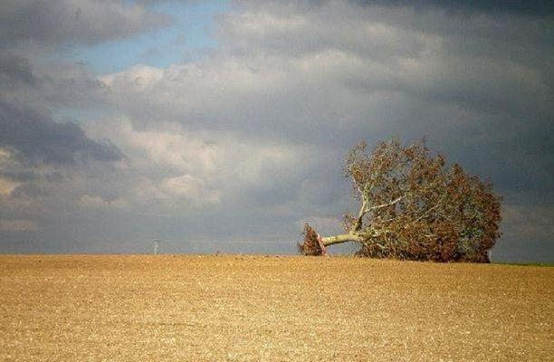 solitude de l'arbre