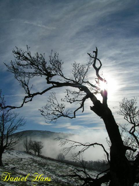 solitude de l'arbre sur les monts