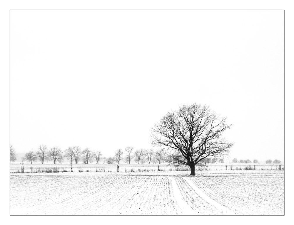 # solitude in snow #
