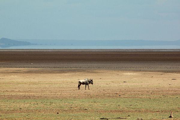 Solitude - Lac Manyara Tanzanie