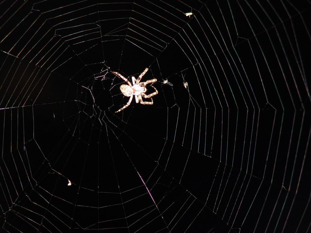 Soll ich sie Thekla nennen, diese Spinne?