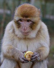 Sollte ich die Banane nicht???