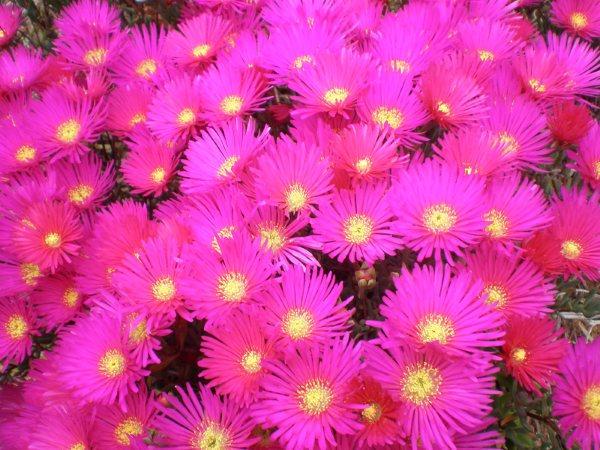Solo flores