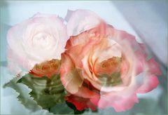 Solo tres Rosas -Nur drei Rosen