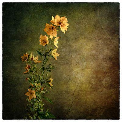 Solo un fiore...