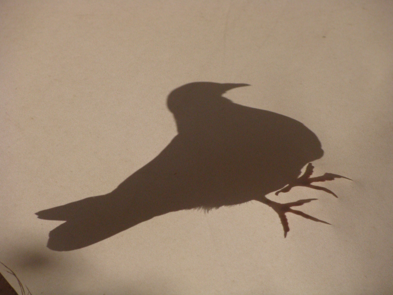sombra en la sombrilla