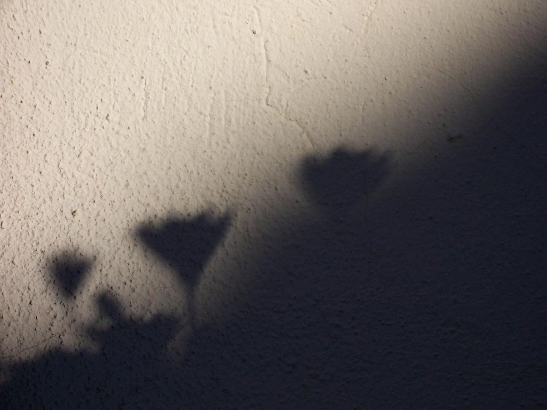 sombra margaritas