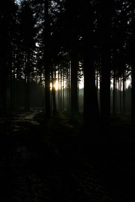 SOMBRE FOREST