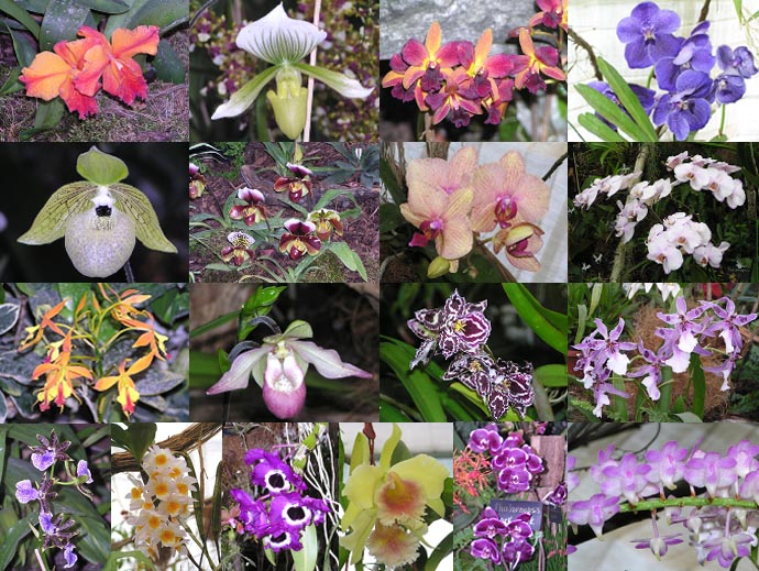 Some orchids!