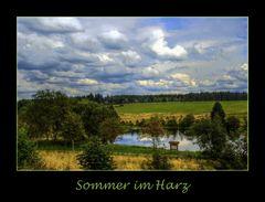Sommer 2007 im Harz