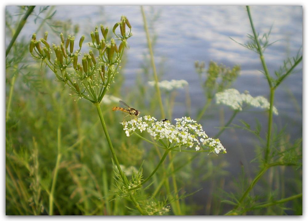 Sommer am Fluss