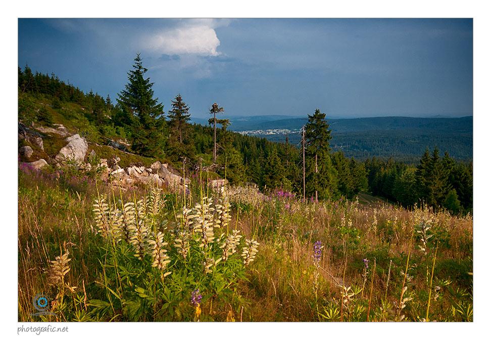 Sommer am Ochsenkopf