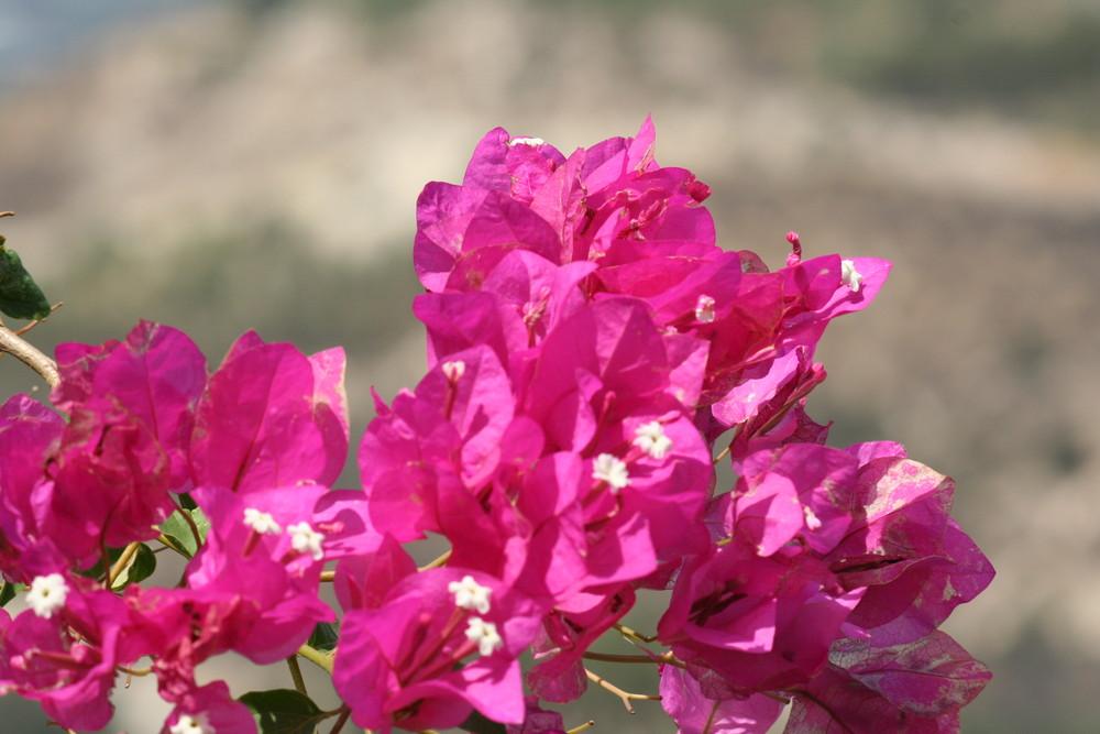 Sommer auf Kreta